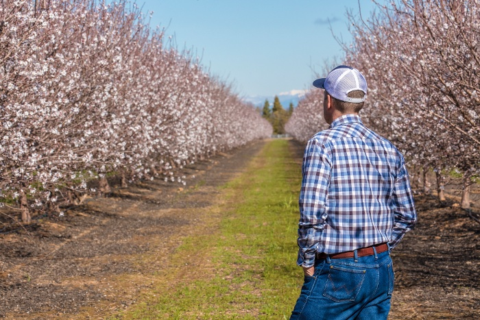 Farmer standing in an almond orchard during full bloom
