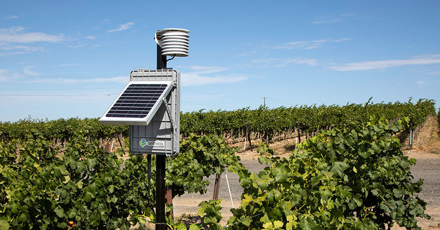 Semios-In-canopy-Weather-Station_grape-vineyard