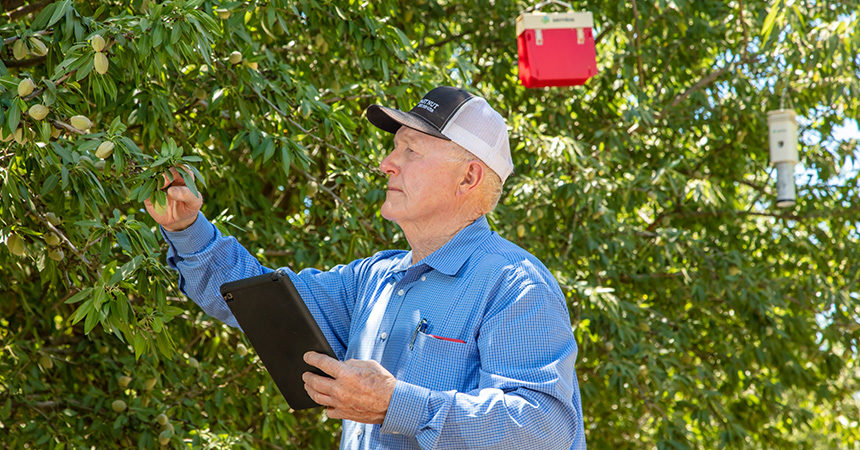 man monitoring plant stress in an orchard
