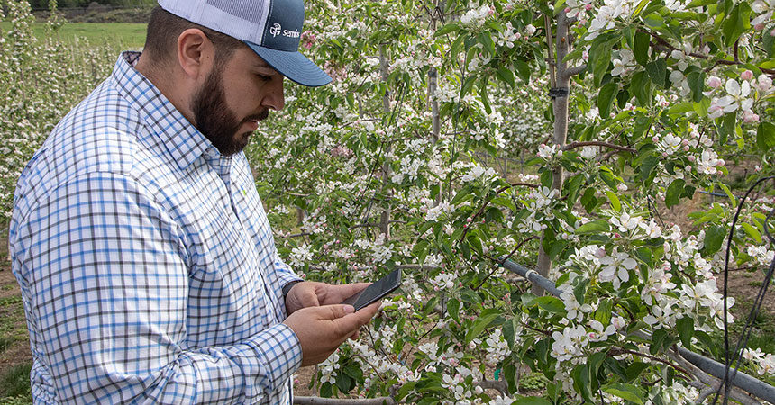 A man recording a field observation in an apple orchard at bloom