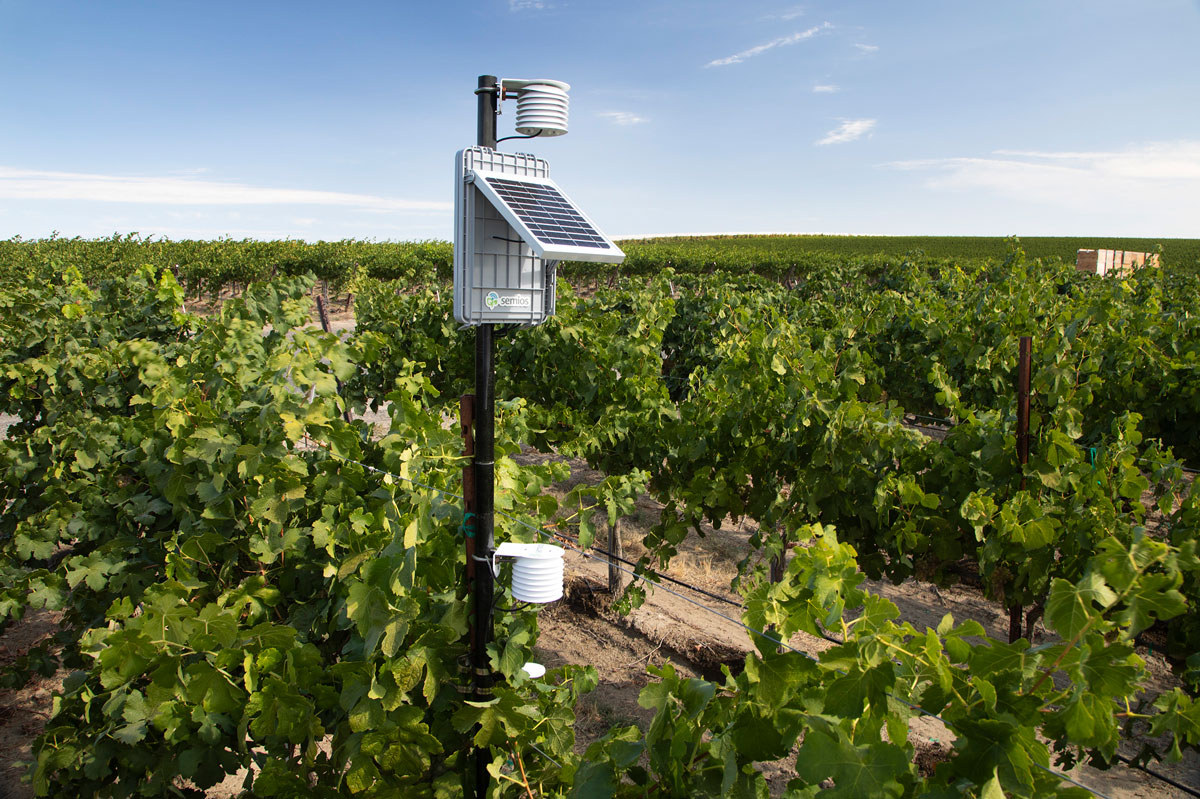 A Semios in-canopy weather station with attached in-block temperature sensors in a grape vineyard