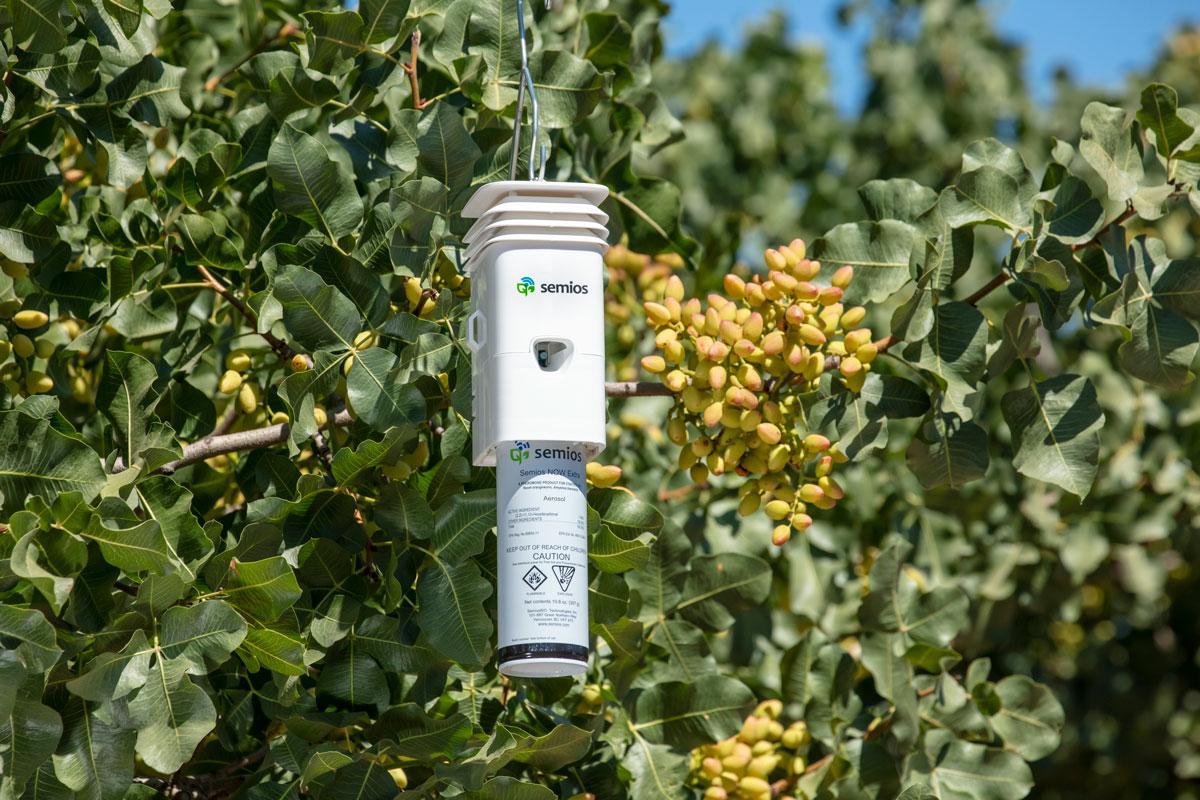 A Semios Pheromone Aerosol Dispenser hanging in a pistachio orchard