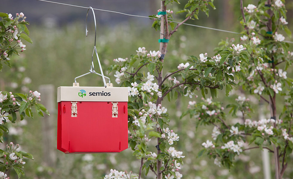 Red Semios automated camera trap in an apple orchard during bloom
