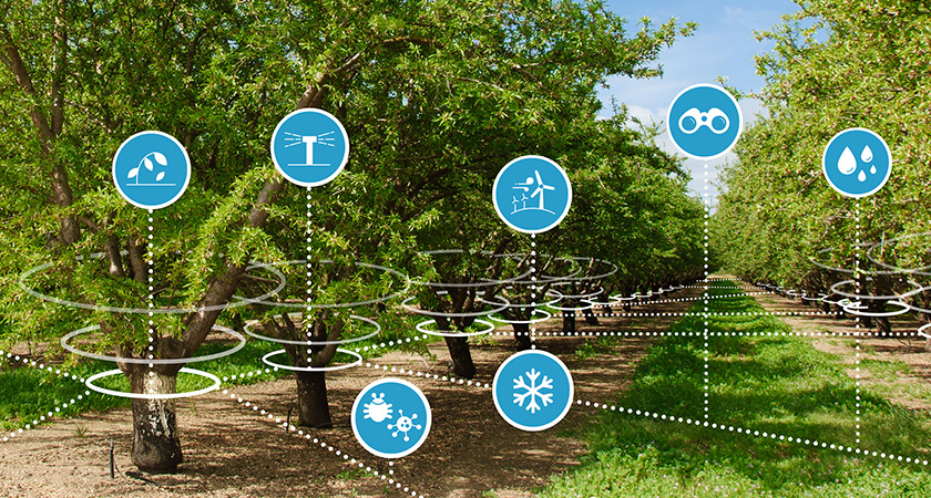 Almond orchard connected to a network of sensors providing insights into various in-canopy conditions.
